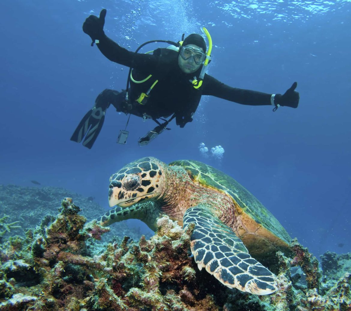 Diver encounters a sea turtle. The aquatic life you'll find while yachting in Australia can't be beat.