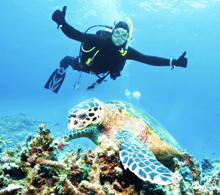 Go diving with sea turtles on your Australia yacht vacation