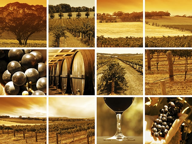 Images of Australian vinyards, an excellent onshore excursion for your charter vacation