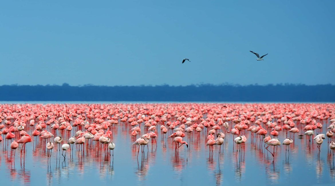 A flock of flamingos, wildlife is one of the attractions you'll enjoy on your BVI yacht charter.