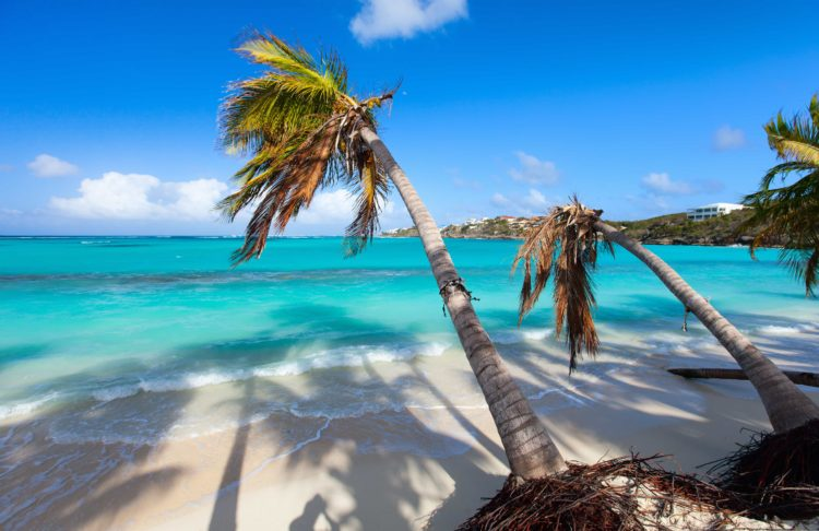 turquoise sea and white sand with plan trees blowing in wind