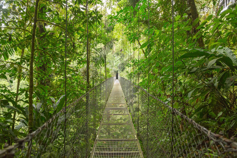 Rope bridge through the costa rican jungle
