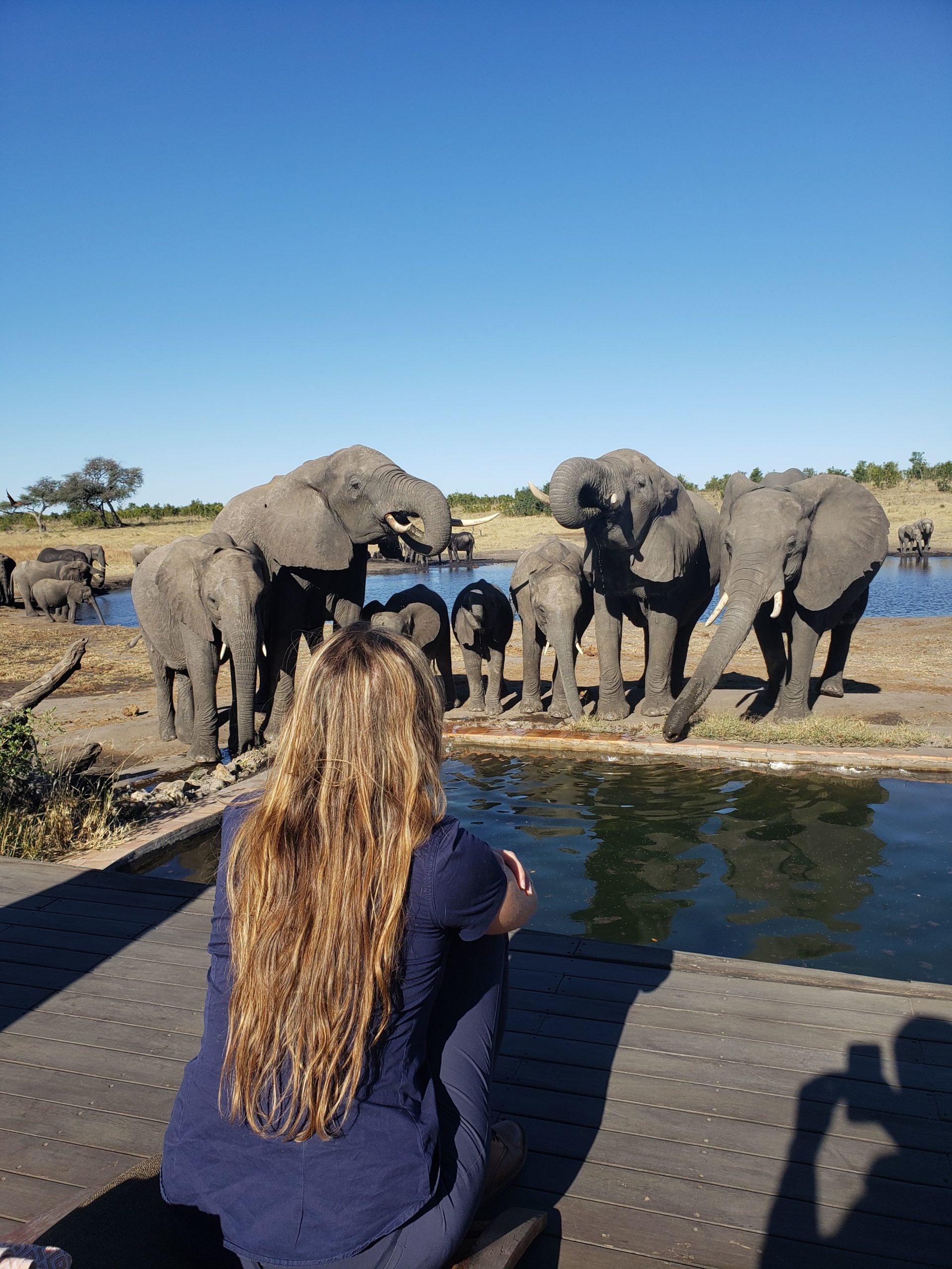 woman sitting with her back to the camera while a herd of elephants drink out of a pool in front of her in Zimbabwe
