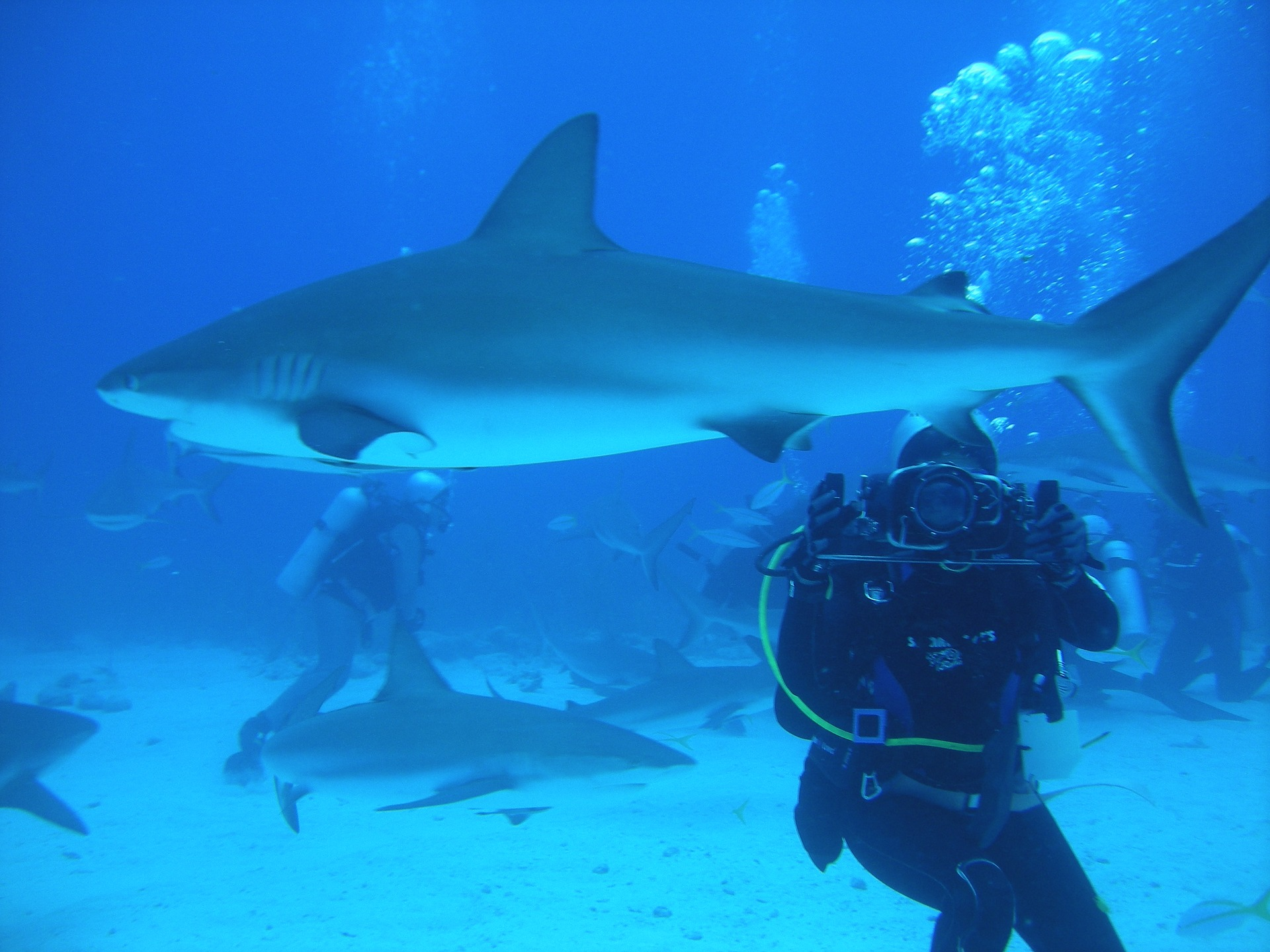 diver with camera underwater in the Bahamas swimming with sharks
