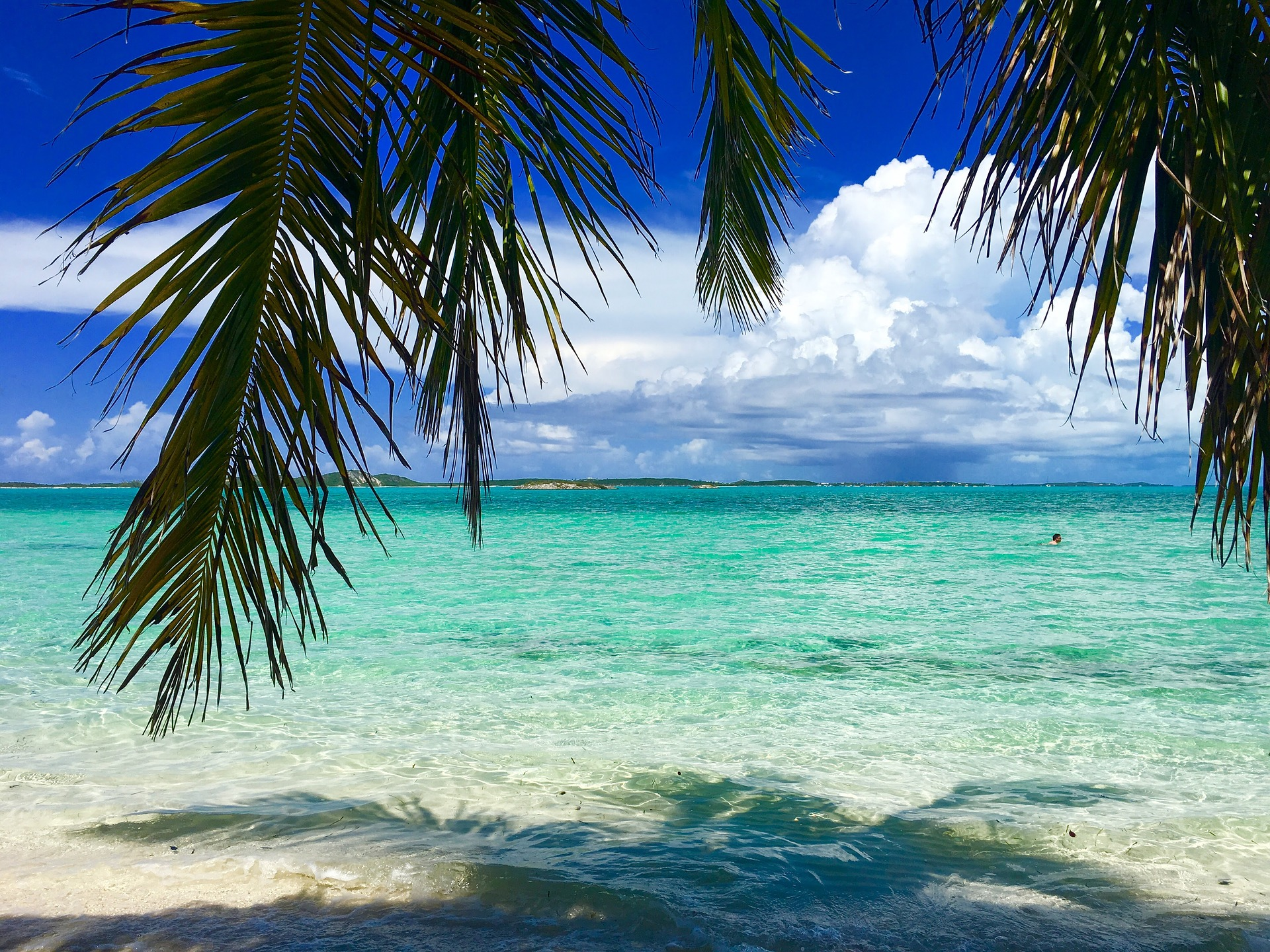 turquoise waters with palm tree hanging in the foreground in Exumas